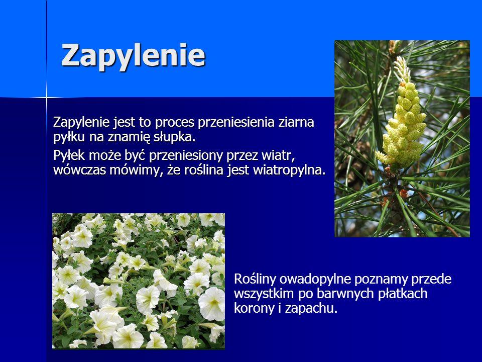 Zapylenie Zapylenie jest to proces przeniesienia ziarna pyłku na znamię słupka. Pyłek może być przeniesiony przez wiatr, wówczas mówimy, że roślina je