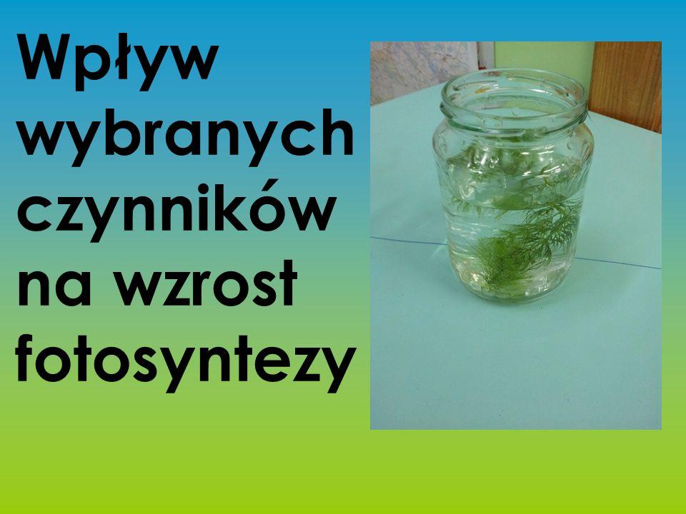 PROBLEM BADAWCZY Czy wpływ wybranych czynników decyduje o wzroście fotosyntezy?