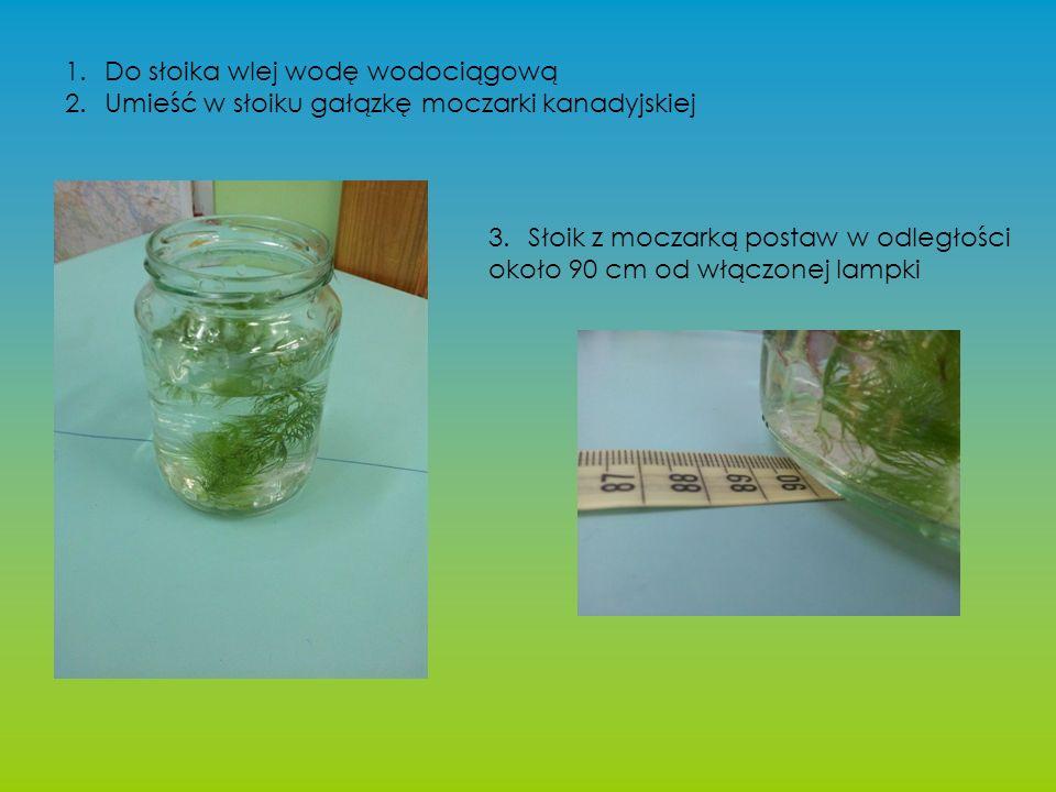 1.Do słoika wlej wodę wodociągową 2.Umieść w słoiku gałązkę moczarki kanadyjskiej 3.Słoik z moczarką postaw w odległości około 90 cm od włączonej lampki