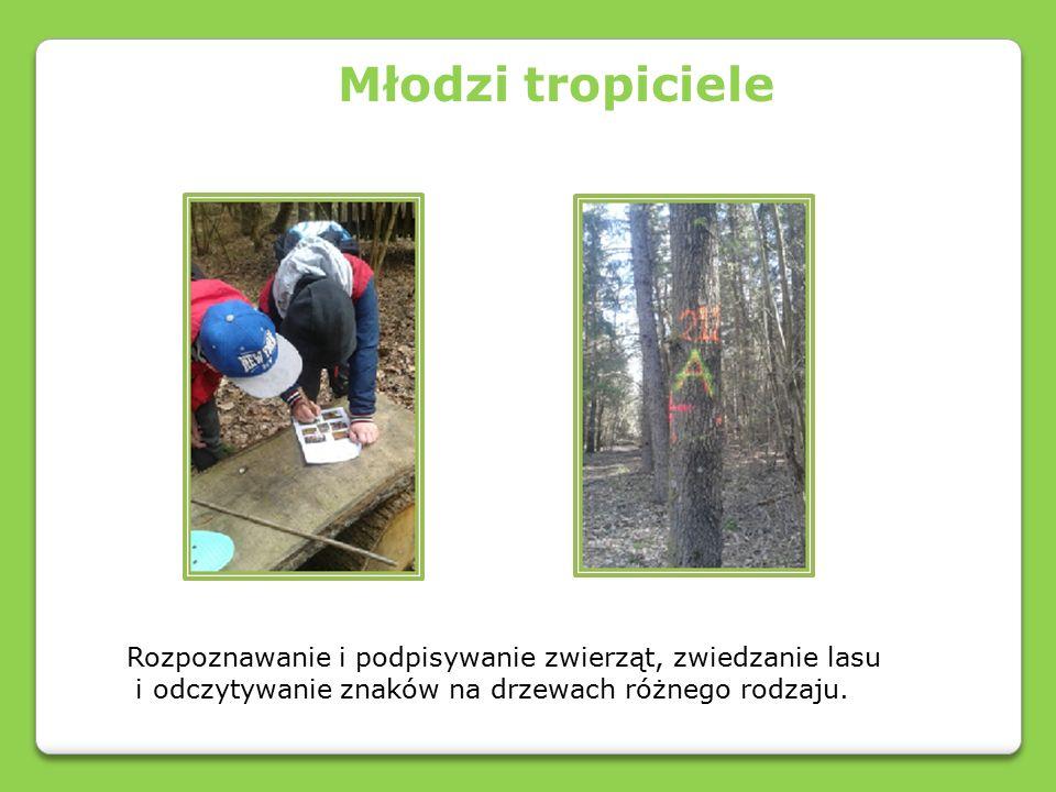 Rozpoznawanie i podpisywanie zwierząt, zwiedzanie lasu i odczytywanie znaków na drzewach różnego rodzaju.
