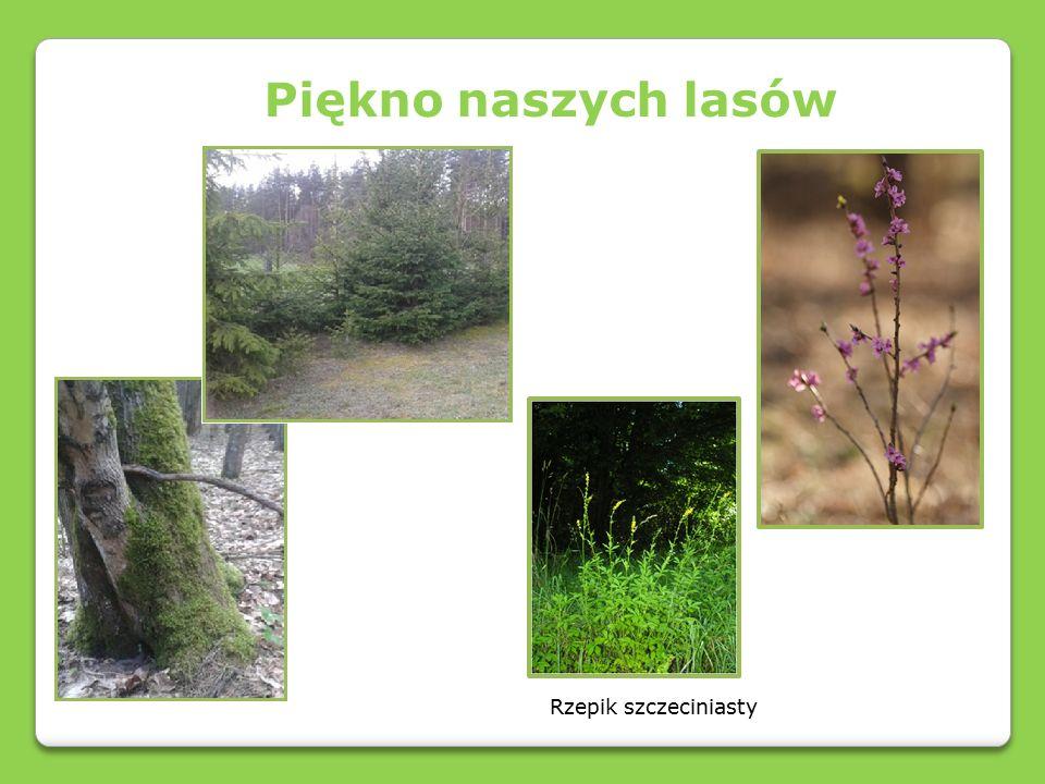 Wyjątkowość naszych lasów Cmentarze w naszych lasach Prace archeologiczne w naszych lasach