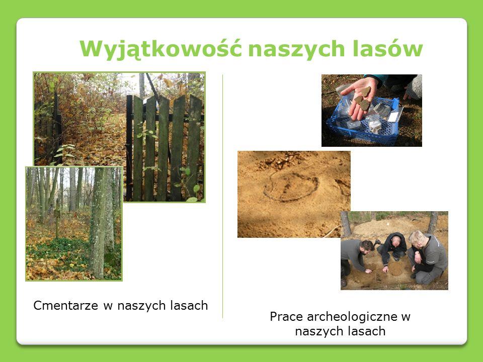 Prezentację wykonały: Wiktoria Bazarewicz, Wiktoria Bobińska Izabela Dobreńko Uczennice klasy VIa Zespółu Szkół w Pieckach Szkoła Podstawowa Zdjęcia wykonały autorki prezentacji.