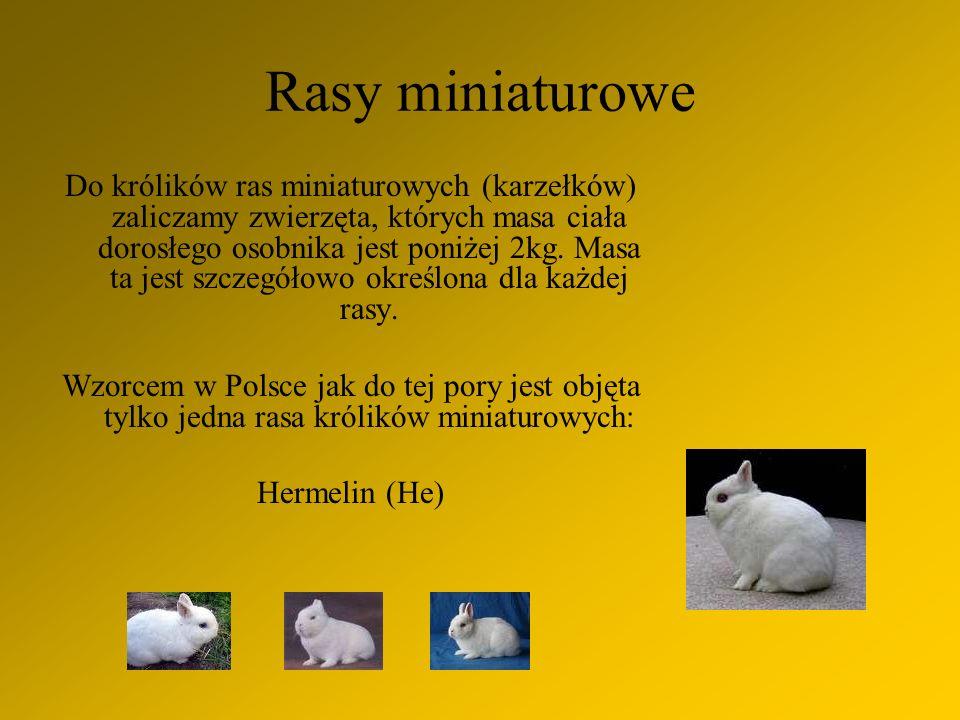 Rasy miniaturowe Do królików ras miniaturowych (karzełków) zaliczamy zwierzęta, których masa ciała dorosłego osobnika jest poniżej 2kg.
