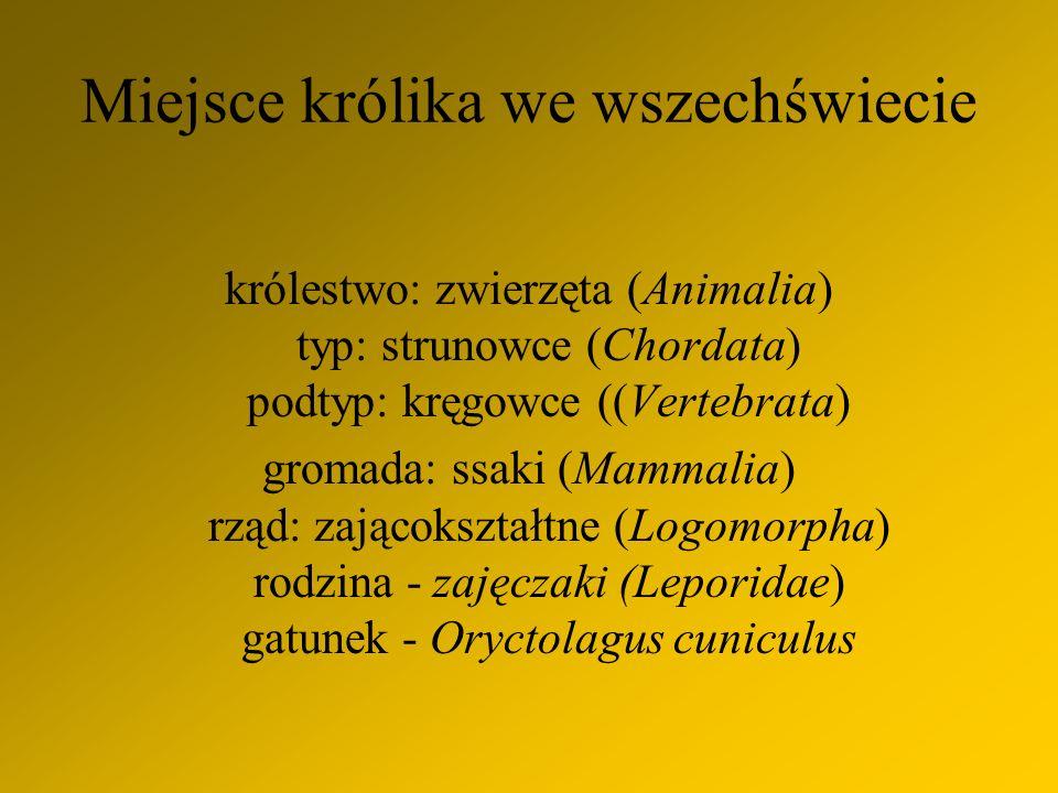 Miejsce królika we wszechświecie królestwo: zwierzęta (Animalia) typ: strunowce (Chordata) podtyp: kręgowce ((Vertebrata) gromada: ssaki (Mammalia) rząd: zającokształtne (Logomorpha) rodzina - zajęczaki (Leporidae) gatunek - Oryctolagus cuniculus