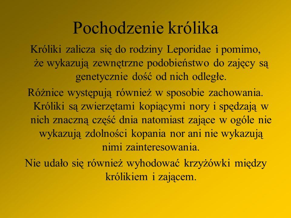 Bibliografia: - Internet - wiedza własna i obserwacja Autor: Marysia Gaszka, klasa V a