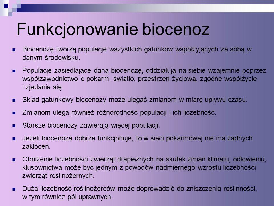 Funkcjonowanie biocenoz Biocenozę tworzą populacje wszystkich gatunków współżyjących ze sobą w danym środowisku.