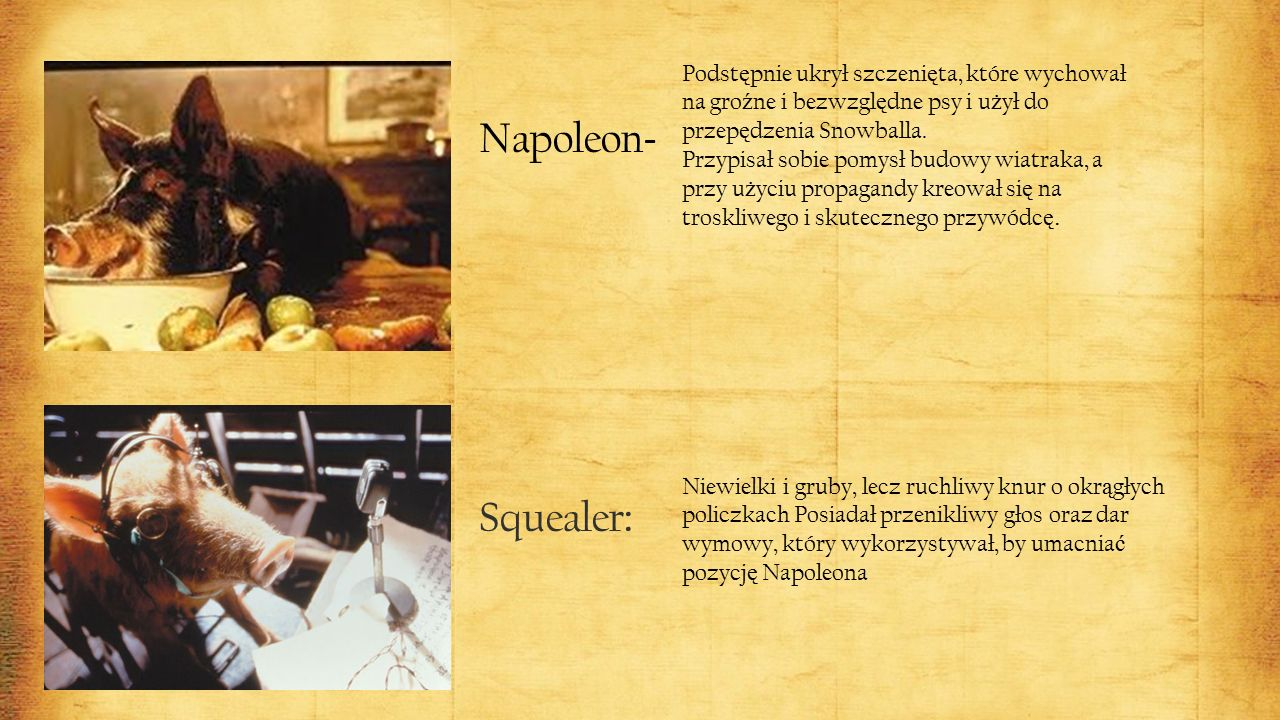 Napoleon - Podst ę pnie ukrył szczeni ę ta, które wychował na gro ź ne i bezwzgl ę dne psy i u ż ył do przep ę dzenia Snowballa.