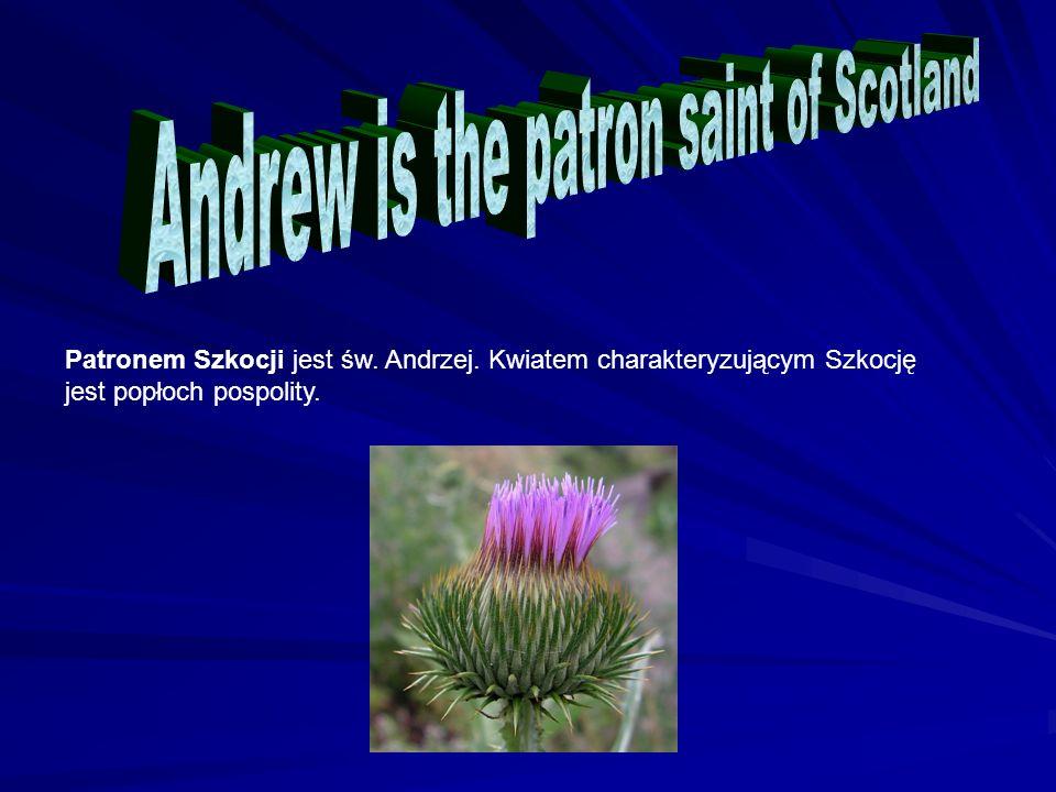 Patronem Szkocji jest św. Andrzej. Kwiatem charakteryzującym Szkocję jest popłoch pospolity.