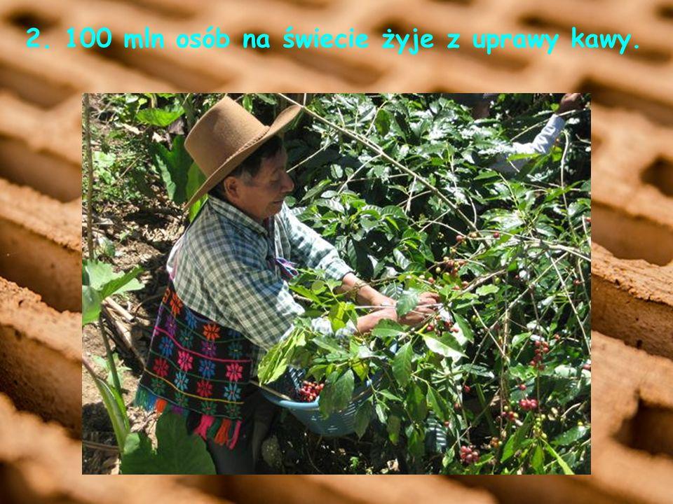 2. 100 mln osób na świecie żyje z uprawy kawy.