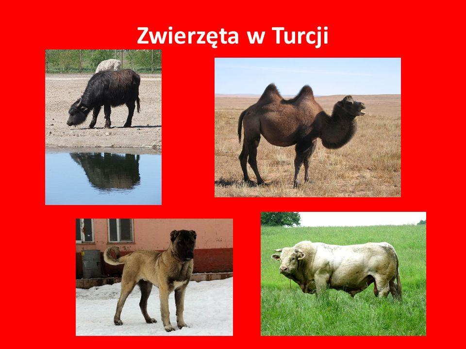 Zwierzęta w Turcji