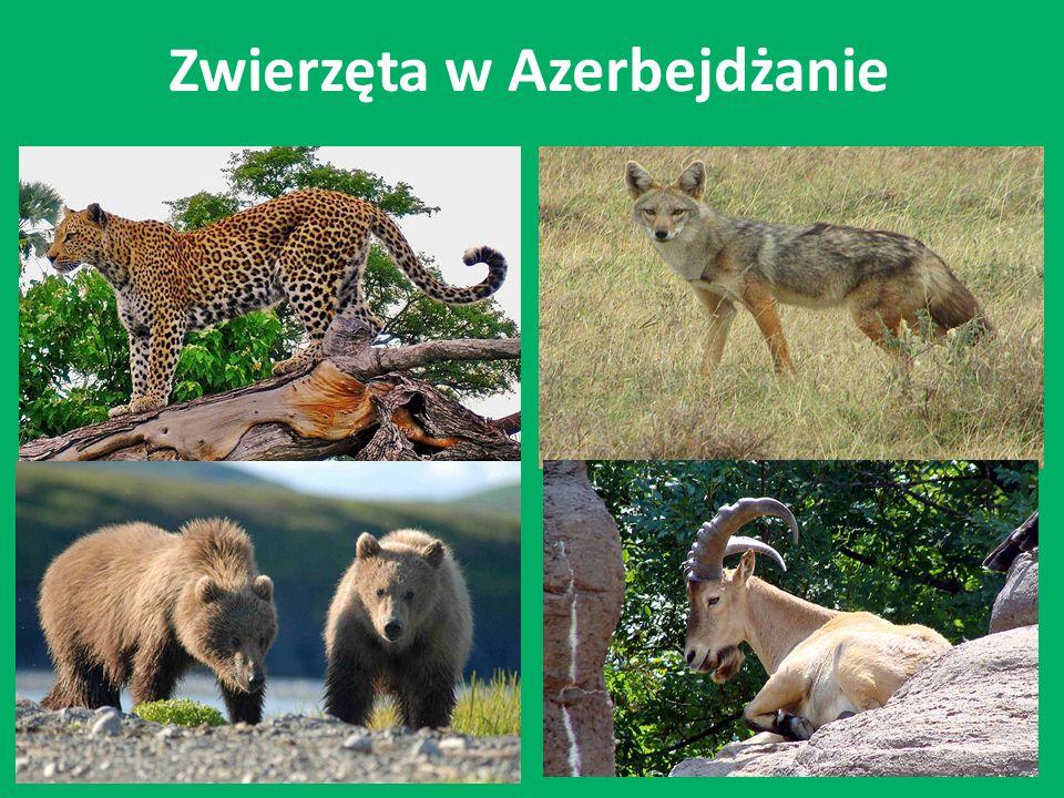 Zwierzęta w Azerbejdżanie