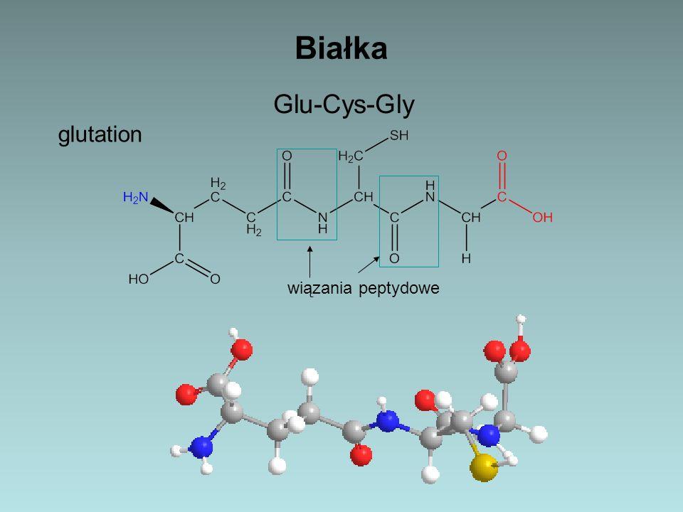 Białka Glu-Cys-Gly glutation wiązania peptydowe