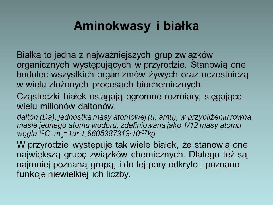 Aminokwasy Pomimo swej ogromnej złożoności białka są tworami złożonymi z niewielkich cząsteczek zwanych aminokwasami.