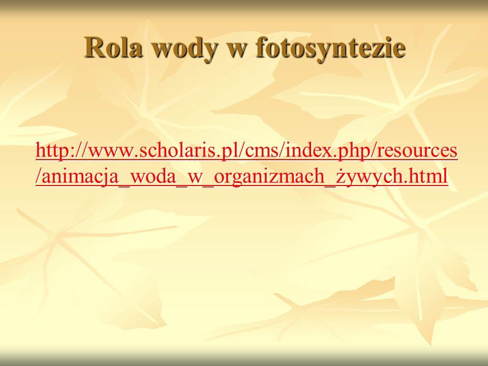 Rola wody w fotosyntezie http://www.scholaris.pl/cms/index.php/resources /animacja_woda_w_organizmach_żywych.html http://www.scholaris.pl/cms/index.ph