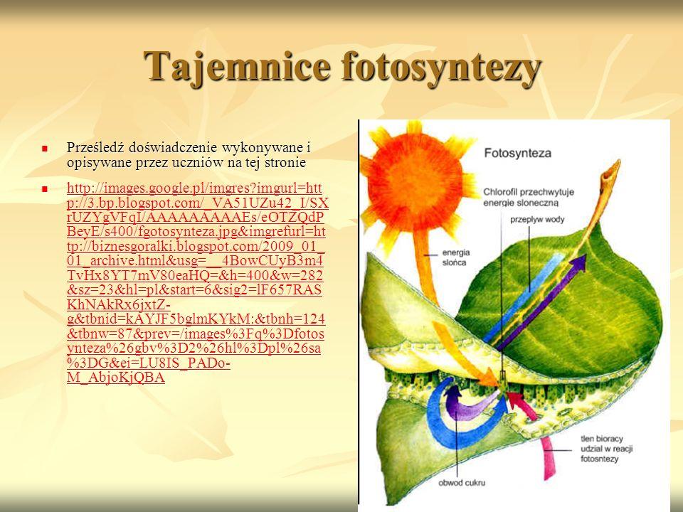 Tajemnice fotosyntezy Prześledź doświadczenie wykonywane i opisywane przez uczniów na tej stronie Prześledź doświadczenie wykonywane i opisywane przez