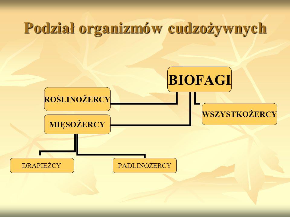 Podział organizmów cudzożywnych BIOFAGI ROŚLINOŻERCYWSZYSTKOŻERCY MIĘSOŻERCY DRAPIEŻCYPADLINOŻERCY