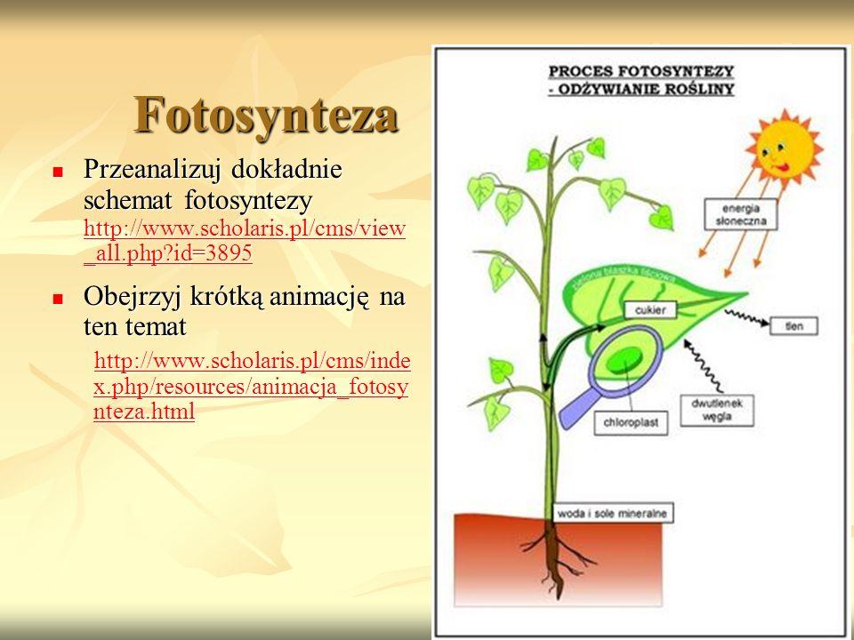 Fotosynteza Przeanalizuj dokładnie schemat fotosyntezy http://www.scholaris.pl/cms/view _all.php?id=3895 Przeanalizuj dokładnie schemat fotosyntezy ht
