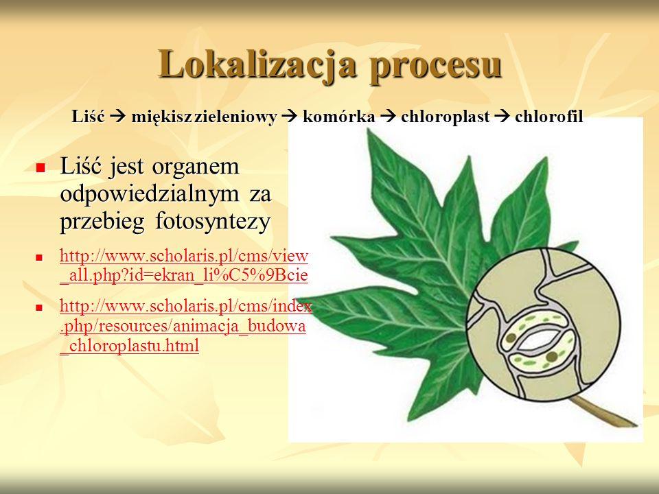 Lokalizacja procesu Liść jest organem odpowiedzialnym za przebieg fotosyntezy Liść jest organem odpowiedzialnym za przebieg fotosyntezy http://www.sch