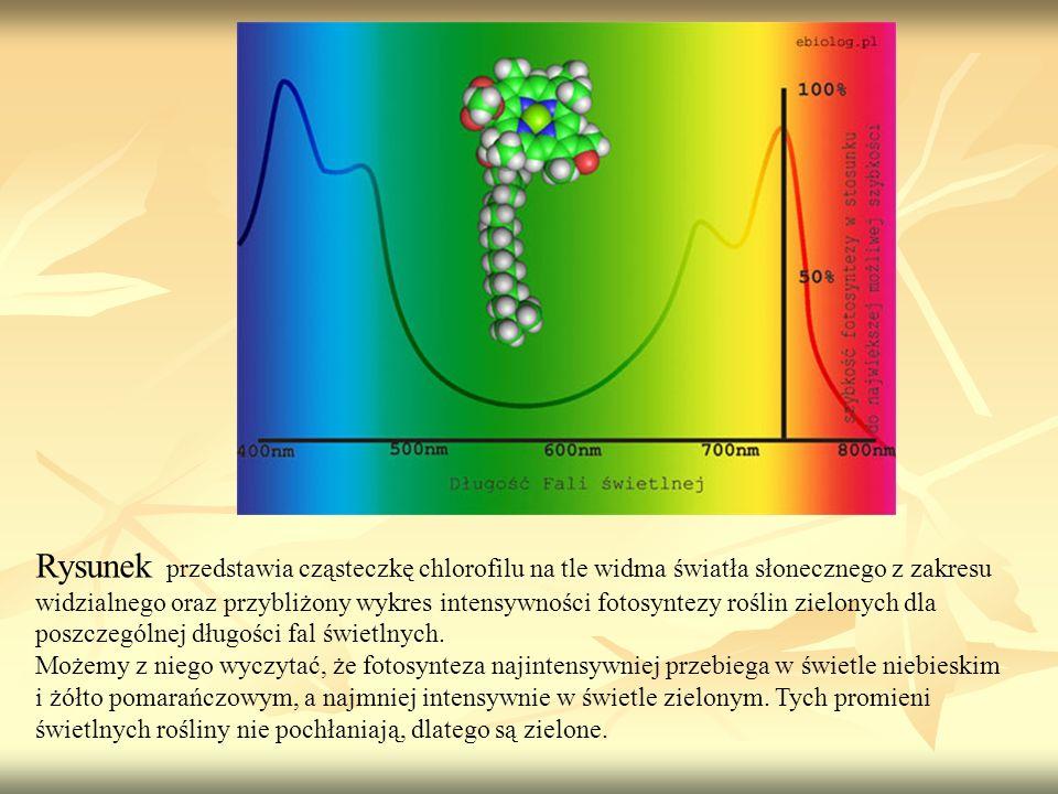 Rysunek przedstawia cząsteczkę chlorofilu na tle widma światła słonecznego z zakresu widzialnego oraz przybliżony wykres intensywności fotosyntezy roś