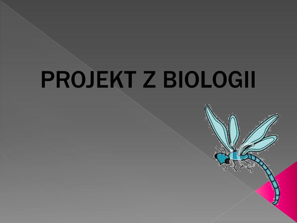 PROJEKT Z BIOLOGII