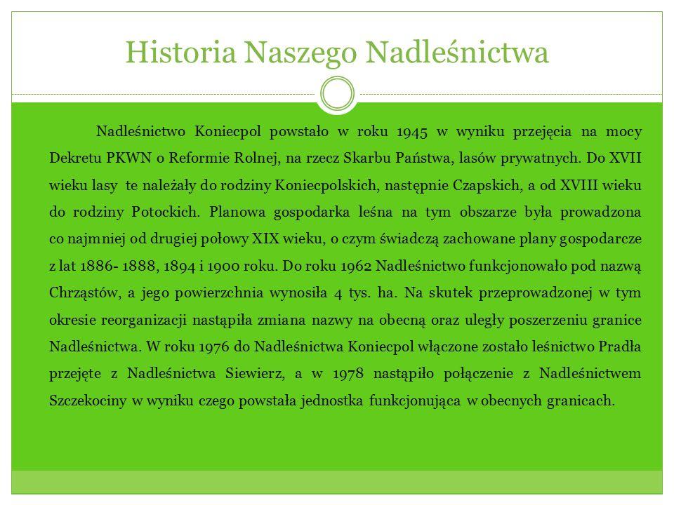 Historia Naszego Nadleśnictwa Nadleśnictwo Koniecpol powstało w roku 1945 w wyniku przejęcia na mocy Dekretu PKWN o Reformie Rolnej, na rzecz Skarbu P