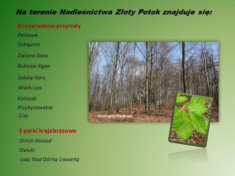 Obręb leśny Złoty Potok jest zróżnicowany terenowo.