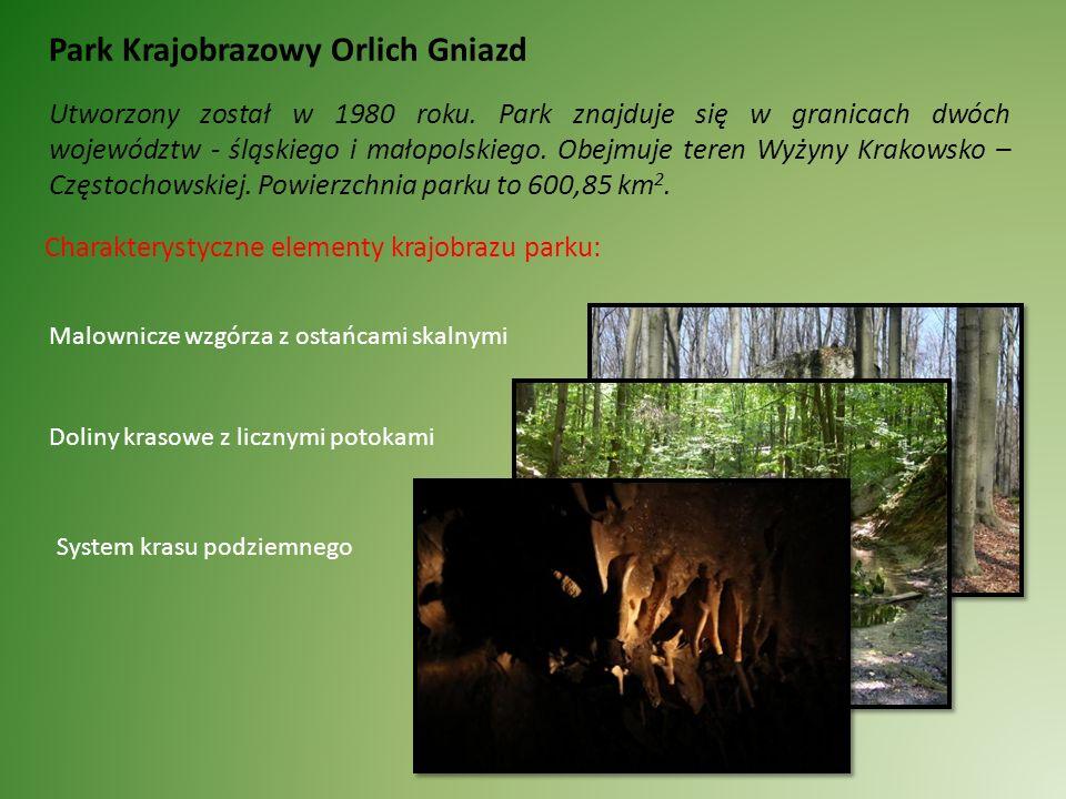 Rezerwat Sokole Góry Powstał jako obiekt prawem chroniony w 1953 roku.