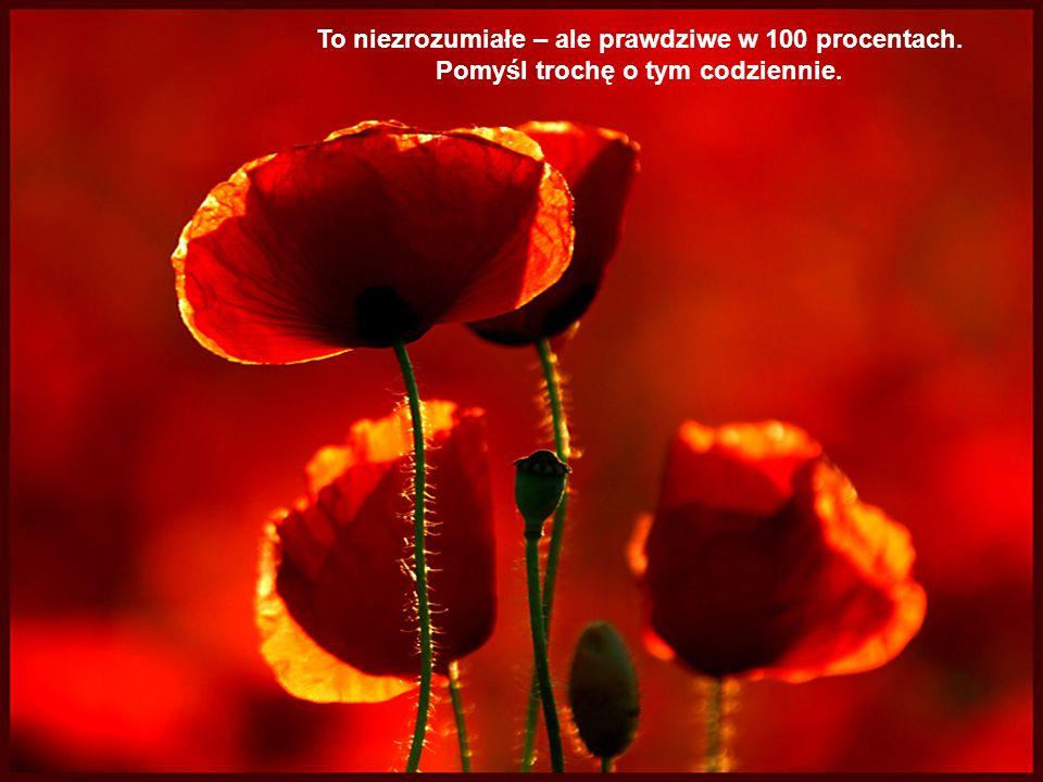 Music: Nightengale Serenade Friendship BouquetBukiet przyjaźni
