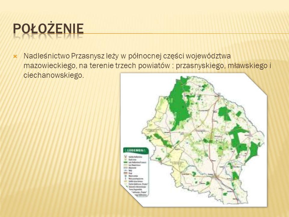  Nadleśnictwo Przasnysz leży w północnej części województwa mazowieckiego, na terenie trzech powiatów : przasnyskiego, mławskiego i ciechanowskiego.
