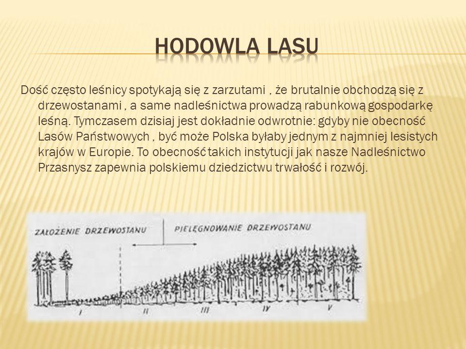 Dość często leśnicy spotykają się z zarzutami, że brutalnie obchodzą się z drzewostanami, a same nadleśnictwa prowadzą rabunkową gospodarkę leśną.