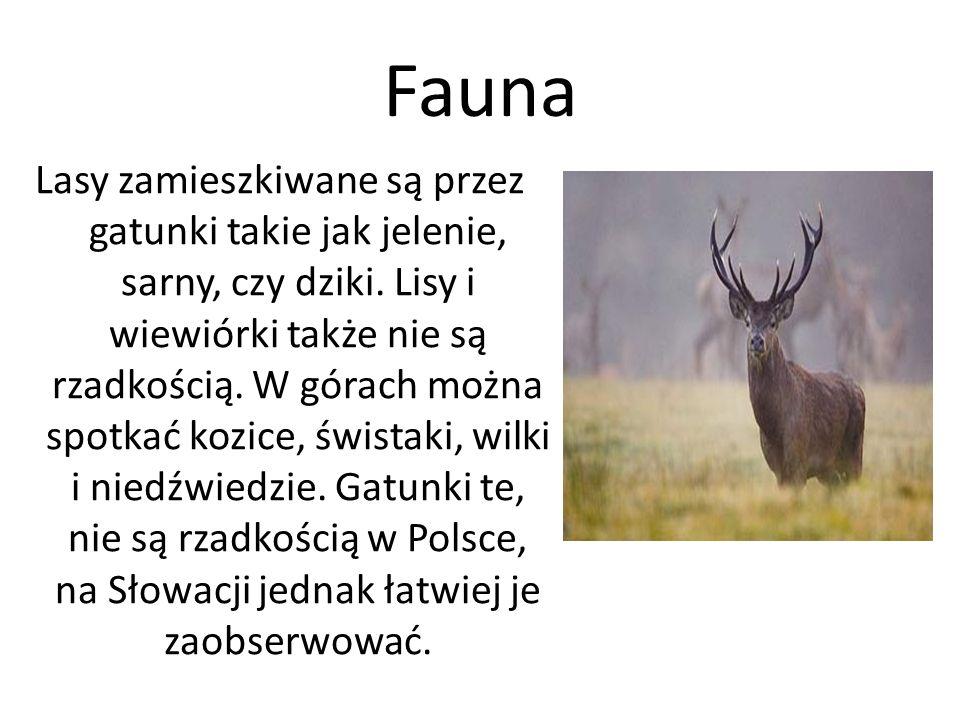 Fauna Lasy zamieszkiwane są przez gatunki takie jak jelenie, sarny, czy dziki.