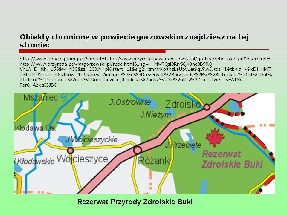 Obiekty chronione w powiecie gorzowskim znajdziesz na tej stronie: http://www.google.pl/imgres?imgurl=http://www.przyroda.powiatgorzowski.pl/grafika/rpbc_plan.gif&imgrefurl= http://www.przyroda.powiatgorzowski.pl/rpbc.html&usg=__MwTQsl8RnSQX9nc9B9RQ- VnLA_E=&h=156&w=430&sz=20&hl=pl&start=11&sig2=cmmrKpahzLaUov1et9qvRw&itbs=1&tbnid=v9xE4_4MT 2NLUM:&tbnh=46&tbnw=126&prev=/images%3Fq%3Drezerwat%2Bprzyrody%2Bw%2Blubuskim%26hl%3Dpl% 26client%3Dfirefox-a%26rls%3Dorg.mozilla:pl:official%26gbv%3D2%26tbs%3Disch:1&ei=lvEATN6- For6_AbxqI3JBQ Rezerwat Przyrody Zdroiskie Buki