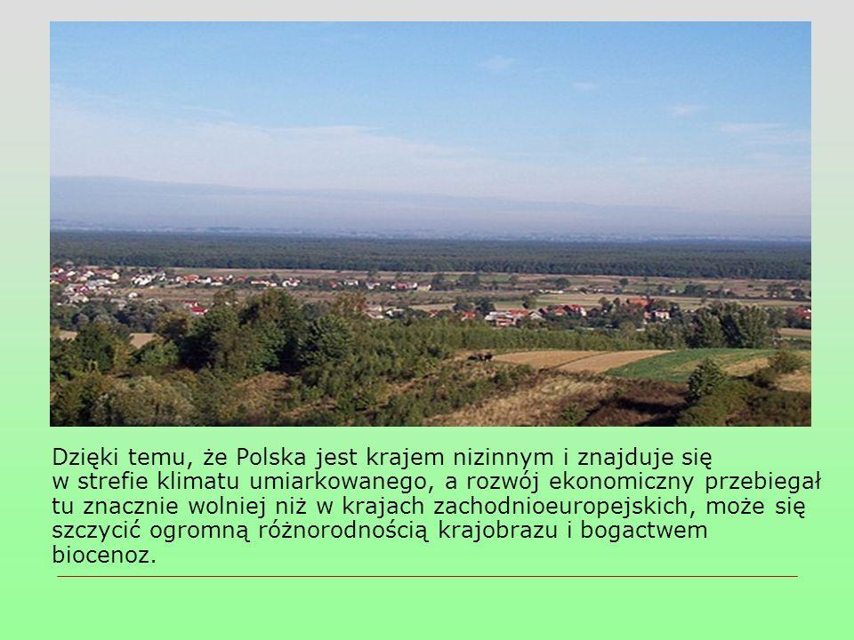  Nie wszystkie jednak ważne przyrodniczo miejsca w kraju daje się objąć statusem parków narodowych (np.