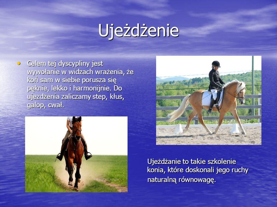 Stęp, kłus Stęp to czterotaktowy, najwolniejszy chód konia.