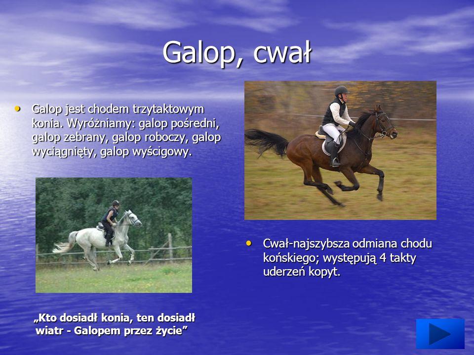 Galop, cwał Galop jest chodem trzytaktowym konia.