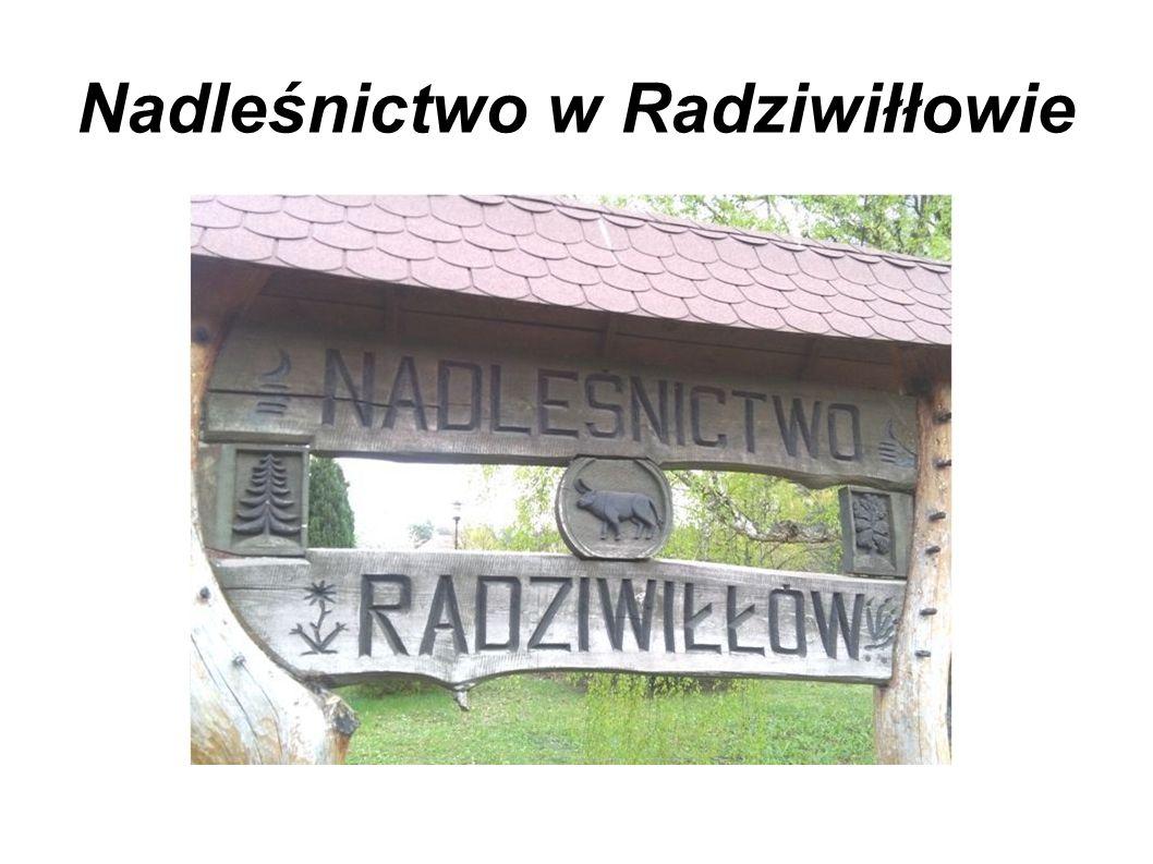 Nadleśnictwo w Radziwiłłowie