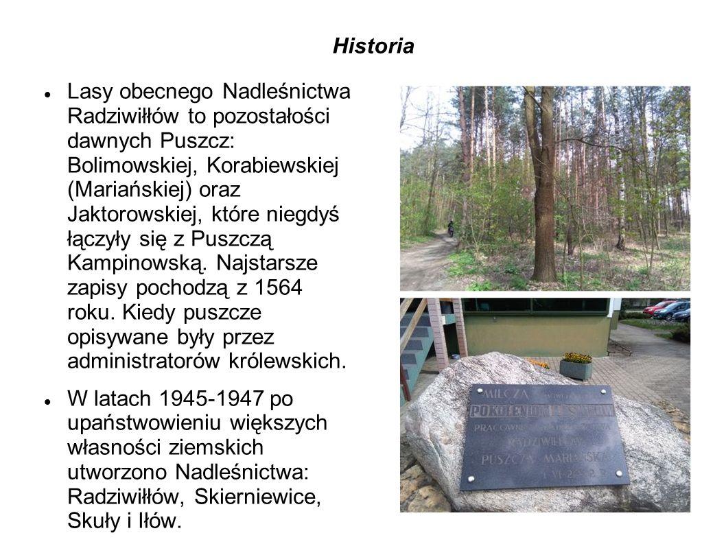 Historia Lasy obecnego Nadleśnictwa Radziwiłłów to pozostałości dawnych Puszcz: Bolimowskiej, Korabiewskiej (Mariańskiej) oraz Jaktorowskiej, które niegdyś łączyły się z Puszczą Kampinowską.