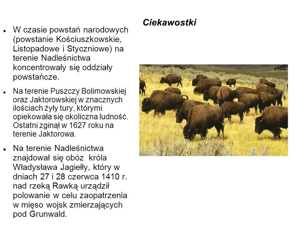 Ciekawostki W czasie powstań narodowych (powstanie Kościuszkowskie, Listopadowe i Styczniowe) na terenie Nadleśnictwa koncentrowały się oddziały powstańcze.