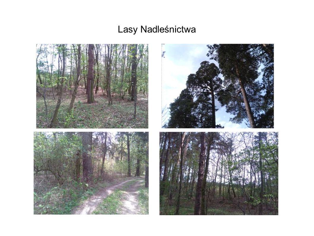 Lasy Nadleśnictwa