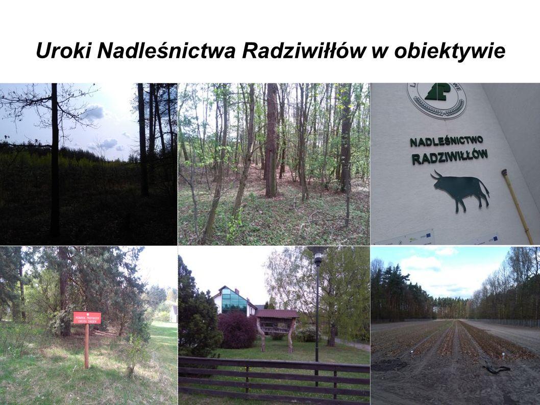Uroki Nadleśnictwa Radziwiłłów w obiektywie