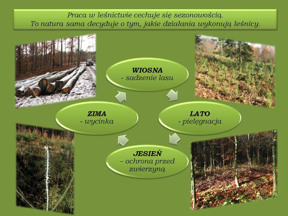 Praca w leśnictwie cechuje się sezonowością.
