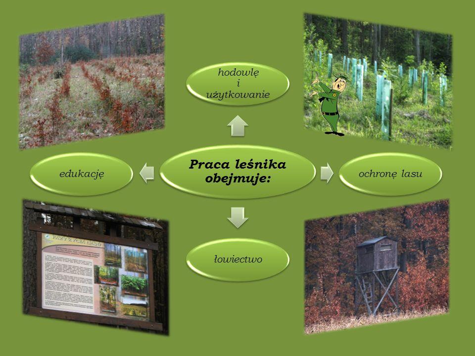 Praca leśnika obejmuje: hodowlę i użytkowanie ochronę lasułowiectwoedukację