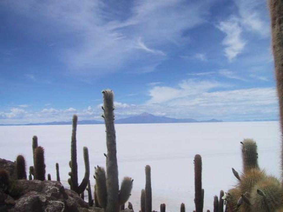 Es wird geschätzt, dass der Salzsee von Uyuni etwa 10 Milliarden Tonnen Salz enthält. Daraus werden pro Jahr ca. 25 Tausend Tonnen extrahiert. Szacuje