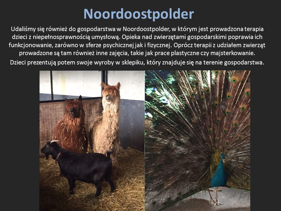 Noordoostpolder Udaliśmy się również do gospodarstwa w Noordoostpolder, w którym jest prowadzona terapia dzieci z niepełnosprawnością umysłową. Opieka