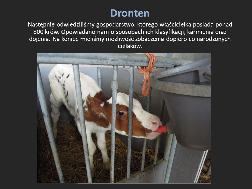 Dronten Następnie odwiedziliśmy gospodarstwo, którego właścicielka posiada ponad 800 krów. Opowiadano nam o sposobach ich klasyfikacji, karmienia oraz