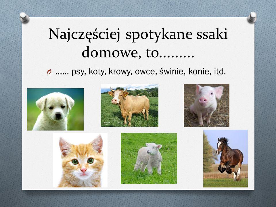 Najczęściej spotykane ssaki domowe, to......... O...... psy, koty, krowy, owce, świnie, konie, itd.
