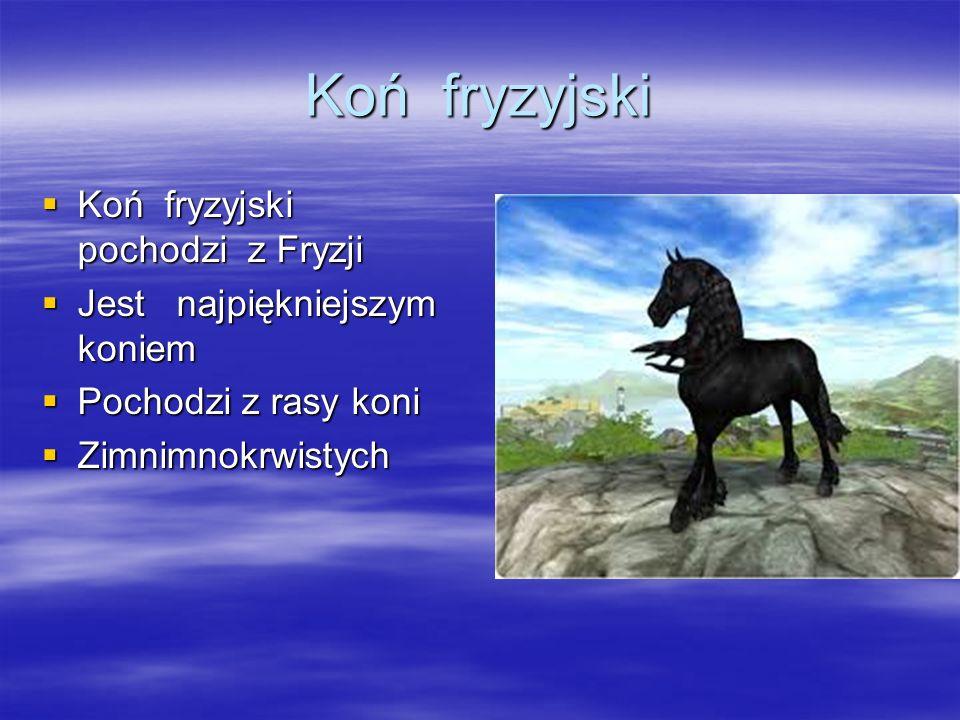 Koń fryzyjski  Koń fryzyjski pochodzi z Fryzji  Jest najpiękniejszym koniem  Pochodzi z rasy koni  Zimnimnokrwistych