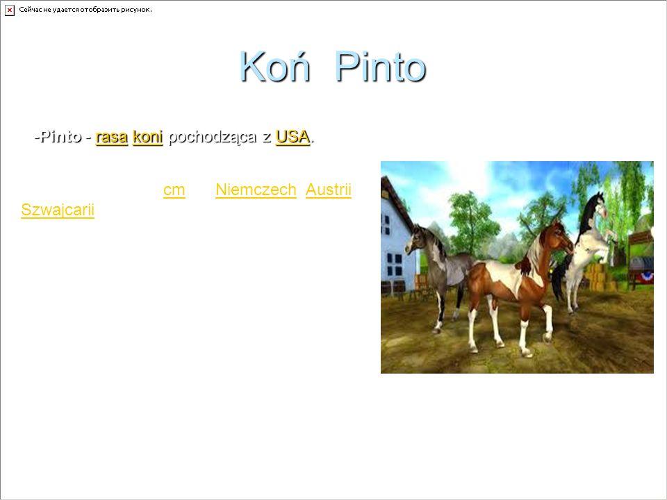 Koń Pinto -Pinto - rasa koni pochodząca z USA.