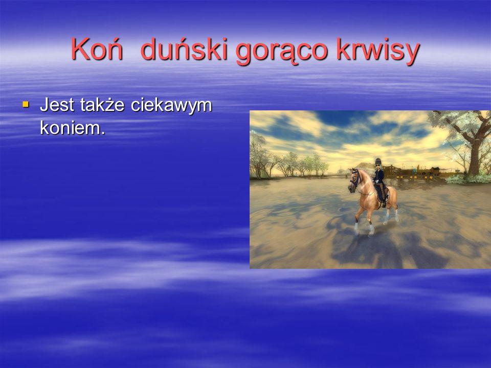 Koń duński gorąco krwisy  Jest także ciekawym koniem.
