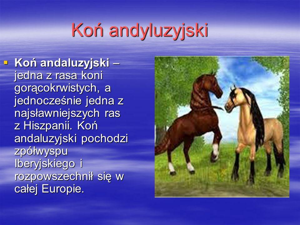 Koń andyluzyjski  Koń andaluzyjski – jedna z rasa koni gorącokrwistych, a jednocześnie jedna z najsławniejszych ras z Hiszpanii.
